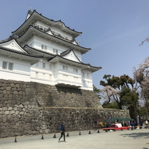 小田原城 満開の桜